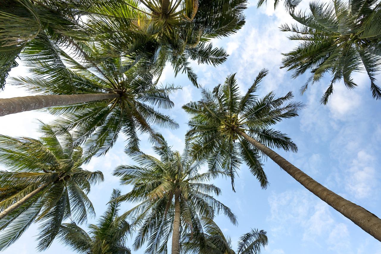 palm-trees-3058728_1280
